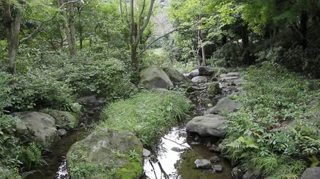 ribeiro : Creek