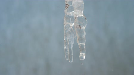 clear liquid : Dripping Icicle. melting Icicles, Icicle hanging from roof, spring drops Stock Footage