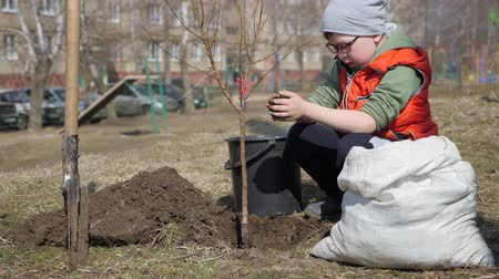 груша : Spring. A little boy planting fruit trees next to a multi-storey residential building. Ecology, planting seedlings on the street. soil falls slowly from the little hands of the child down on the ground under a tree.
