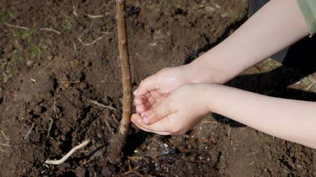 segmento : Spring. A little boy planting fruit trees next to a multi-storey residential building. Ecology, planting seedlings on the street. Drops of water slowly fall from the small palms of the child to the ground down under the tree. Watering of young plants. Clo Stock Footage
