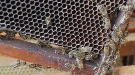 keeper : Working bees work honeycomb with honey.