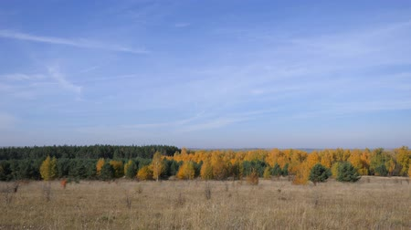 zöld fű : Vast Expanses Of Russia. Golden Autumn. Yellow-red forest on a background of blue sky with small cirrus clouds. Stock mozgókép