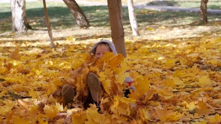 make friends : Autumn. Small children in the yellow leaves. Children play in the street with fallen leaves. Autumn grove of birches and maples. Boys throw up fallen leaves of trees in the top. A child sits on a carpet of yellow leaves and scatters leaves. boy crawls out Stock Footage