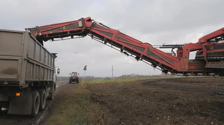 pancar : Sugar-beet harvesting. operation of loading the root in the back of a truck trailer. Stok Video