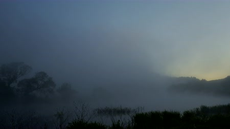 juncos : River is drawn in by white mist at dawn. Vídeos