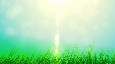 spring green grass and sun