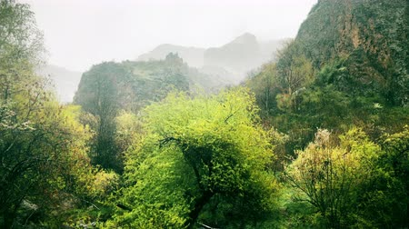 sol : rainy calm nature scene of forest landscape in mountains, spring in mountains, beautiful nature, relax nature scene