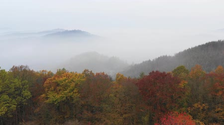 outonal : Top down flying above colorful autumn forest. Stock Footage