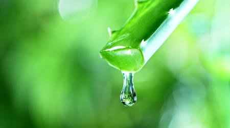 уход за кожей : Super slow motion of dropping aloe vera liquid from leaf.