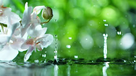 orchideeen : beautiful orchid phalaenopsis with water drop, relaxation with water ripple drops concept , slow motion Stockvideo