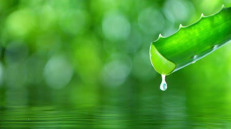 алоэ : Super slow motion of dropping aloe vera liquid from leaf.