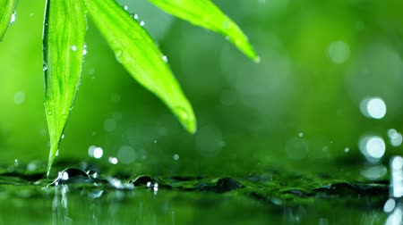 rain forest : fresh green leaves with water drops over the water , relaxation with water ripple drops concept , slow motion