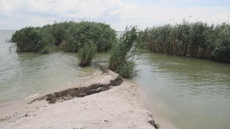 kamış : The channel banks overgrown with reeds Stok Video