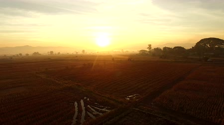 polního : aerial view of sun rising sky in agriculture field