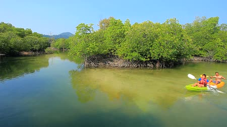 mangue : couples kayaking in mangrove forest sea coastal