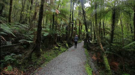 tourist in fern forest trail  of  matheson lake most popular in south island new zealand