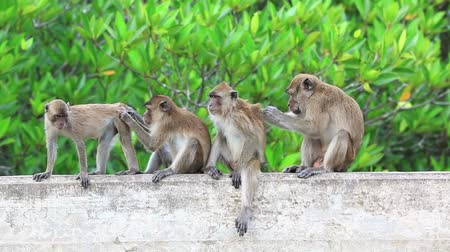 majom : Monkeys sitting on bridge railing