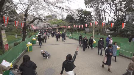 picture box : Tokyo, Japan-March 29, 2019: (speed 3 times) Walking through Ueno Park in Tokyo Stock Footage