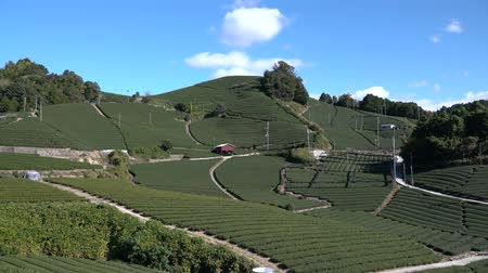 Kyoto,Japan-November 15, 2019: Beautiful Tea fields at Wazuka in Uji, Kyoto Stock mozgókép