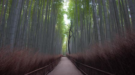 Kyoto,Japan-February 26, 2020: Bamboo grove path in the winter morning in Arashiyama, Kyoto Stock mozgókép