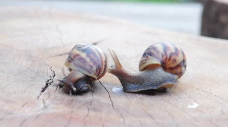 lerdo : meeting two snail on wood show concept of love