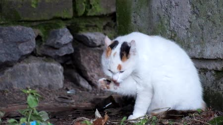 sivilceli : Young kitty is cleaned after eating