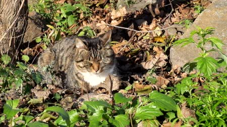 Female tabby cat sits in dry leaves and basks on the sun