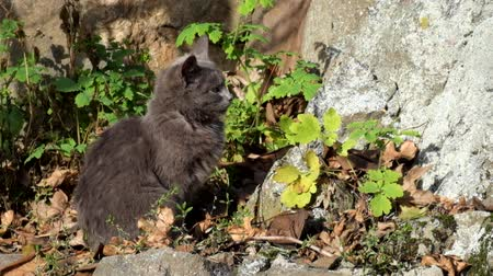 Gray kitten sits at the foot of the rock and basks under the suns rays