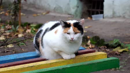 Multicolored cat sits on a bench and looks around Dostupné videozáznamy