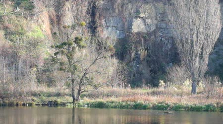pyramidal : Rock and bare trees on the bank of the river Southern Bug (Ukraine, Vinnitsa)
