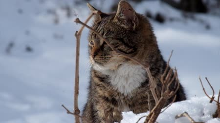 nézett : Tabby cat sits in the snow and is very worried
