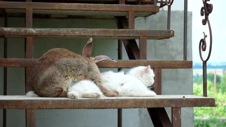 Loving rabbit and a white cat on the steps Стоковые видеозаписи
