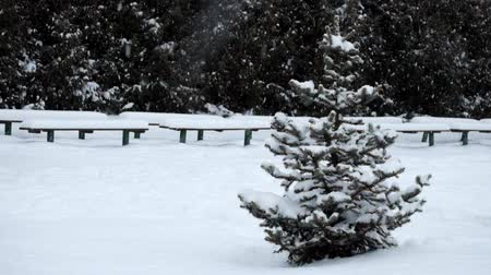 Lonely little spruce stands in winter park during a snowfall