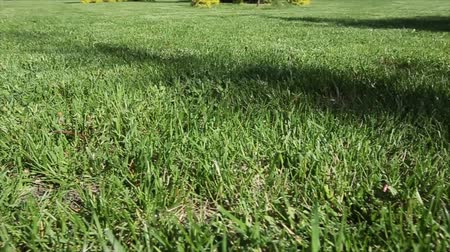 clareira : Green lawn for background. Dolly shot. Close up.
