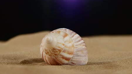 оболочка : Unusual pink marine and ocean seashell on sand, rotation, close up Стоковые видеозаписи