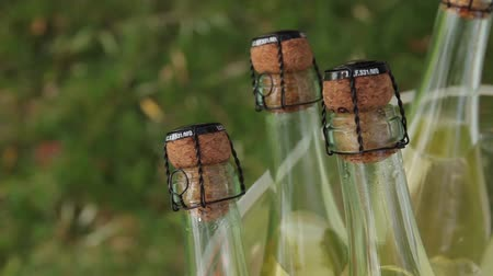 espumante : Bottles sparkling wine against a green background of the grass.