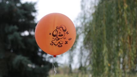 desistir : Orange balloon with image of dog outdoors