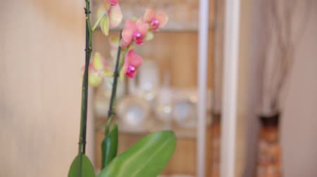 elements : Pink orchid with yellow elements. Close up
