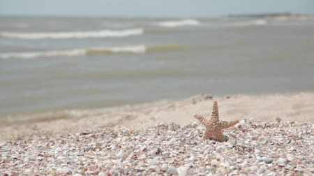 sandy waters : Starfish on the seashore Stock Footage