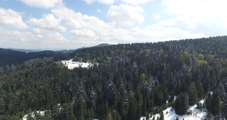 small height : Aerial view. Winter forest on a mountain slope Stock Footage