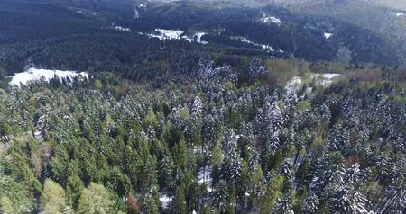 small height : Winter rolling hills to the horizon. Pine forest. Aerial view