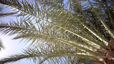 jasně : Clear blue sky and the leaves in the wind from the palm trees