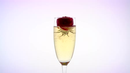hiss : Scarlet rose bud inside sparkling champagne glass. White background
