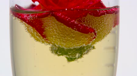 hiss : Red rose bud lies in a glass of champagne. White background. Close up Stock Footage