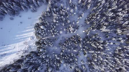 rural area : Pines are snow covered shooting with copter . View from above. Aerial view