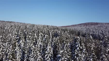 dimension : Winter coniferous forest. Aerial view Stock Footage