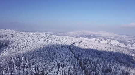размеры : Winter forest in sunny weather, snowflakes fall. Aerial view