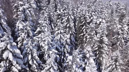 размеры : Winter coniferous forest . View from above. Aerial view