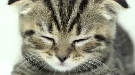 longhair : Kitten is sleeping in a white room. Close up Stock Footage