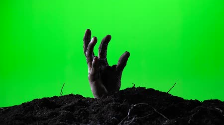 doom : Zombie hand emerging from the ground grave. Halloween concept. Green screen. 016